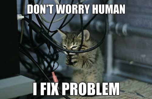 cat, chew, wires, meme, fix problem