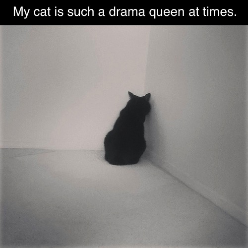 my cat is such a drama queen at times