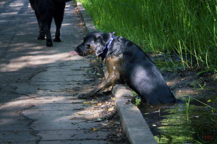 dog, swamp, scary