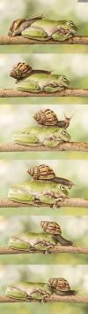 snail, frog, branch, lol, series