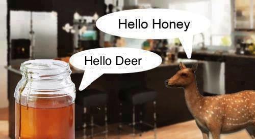 wordplay, honey, deer, pun, literal