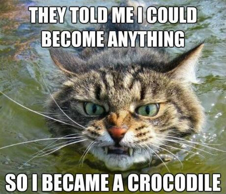 cat, they said i could be anything, meme, crocodile, growl