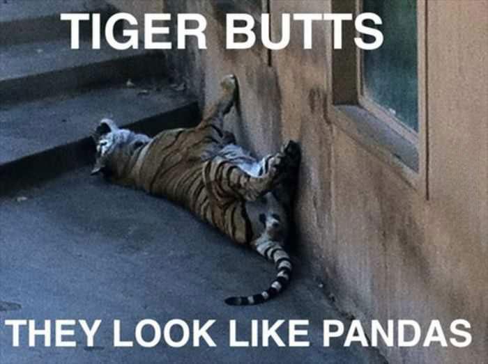 tiger butts, meme, pandas