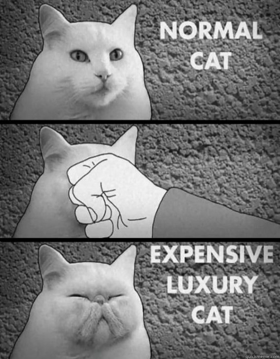 normal cat, expensive luxury cat, punch in the face, bent, dented