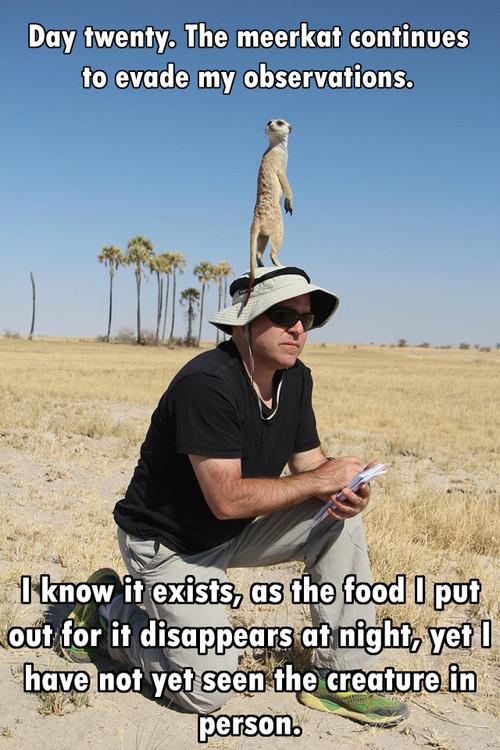 scientist, meerkat, story, lol, joke