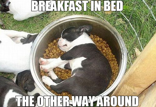 breakfast in bed, the other way around, puppy sleeping in food bowl, meme