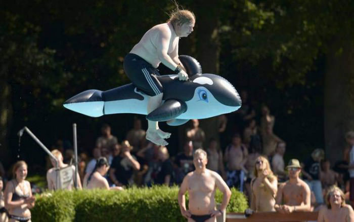 whale, timing, ride, diving board, pool