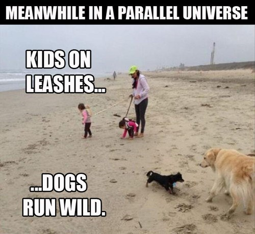 meanwhile, parallel universe, kids on leashes, dogs run wild