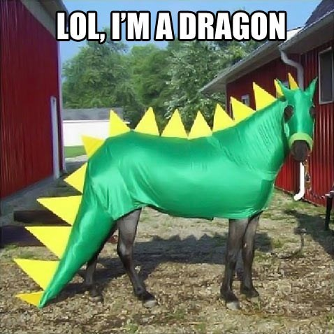 horse, costume, dragon, wtf, lol, meme