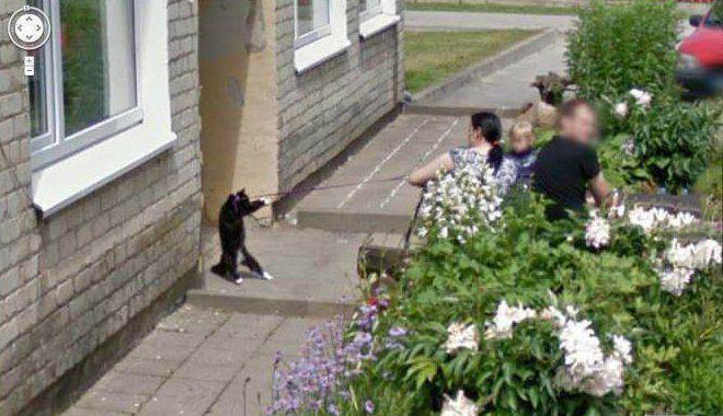 google street view, russia, wtf, cat, leash