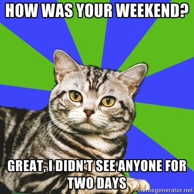 how was your weekend, didn't see anyone for two days, introvert cat, meme