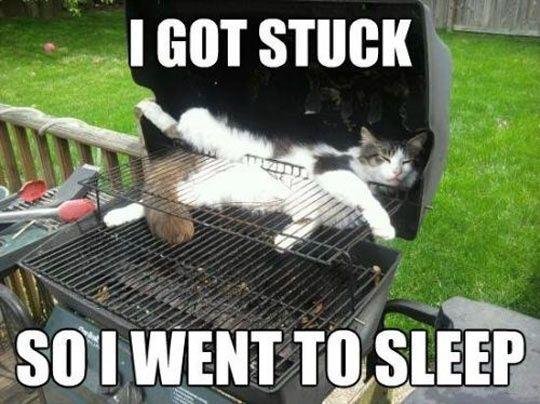 meme, lazy, cat barbecue, bbq, stuck, sleep