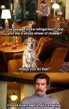 anchorman, will ferrell, dog pooped in fridge and ate a whole wheel of cheese, amazing