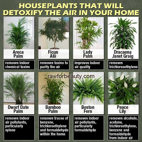 dyk, house plants, detoxify air, list, details, names, health