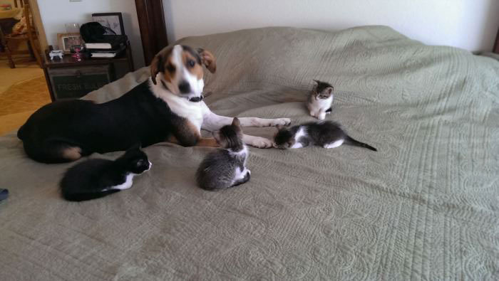 dog, kittens, confused, bed