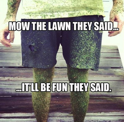 summer, mow the lawn, meme, it'll be fun they said