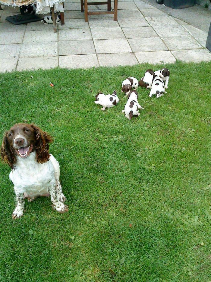 dog, puppies, happy, grass