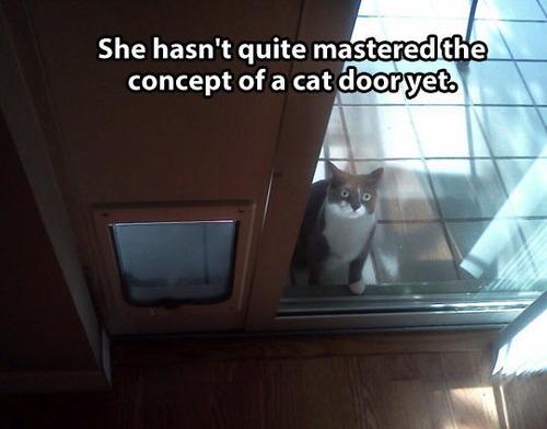 cat door, meme, fail, lol