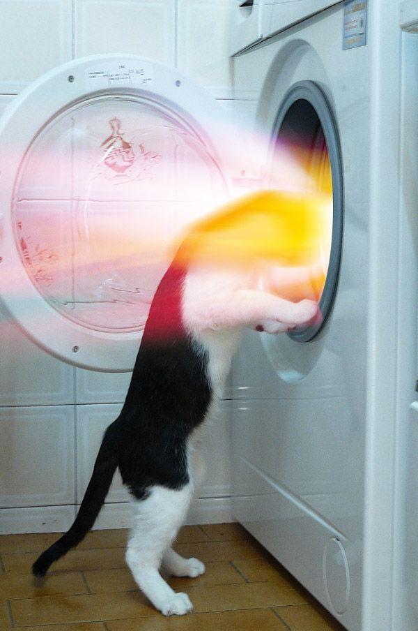 cat, dryer, colors, wtf