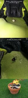 spider, fire, shoe, egg sac