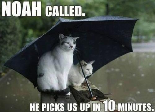 cat, umbrella, noah's ark, 10 minutes, pick up, meme