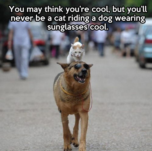cool cat, dog, sunglasses, wtf