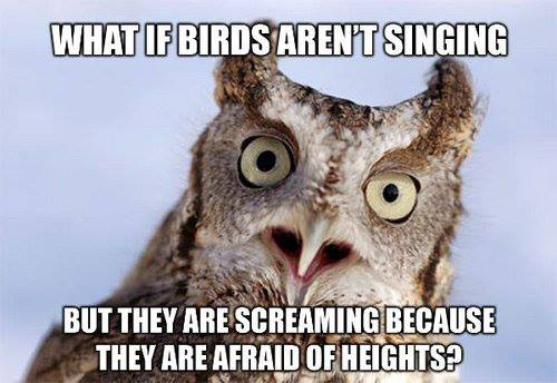 what if birds aren't singing, but they are screaming because they are afraid of heights, meme