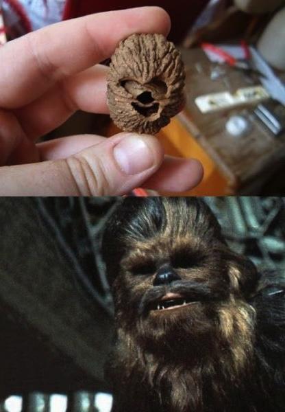 chewbaca, face, nut, totallylookslike, chance, star wars