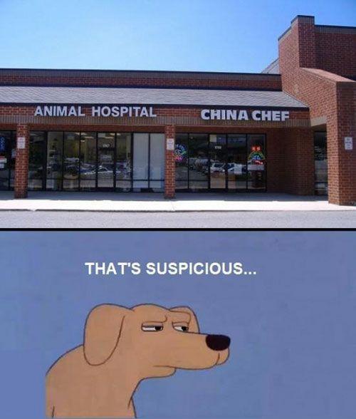 animal hospital, china chef, suspicious, lol