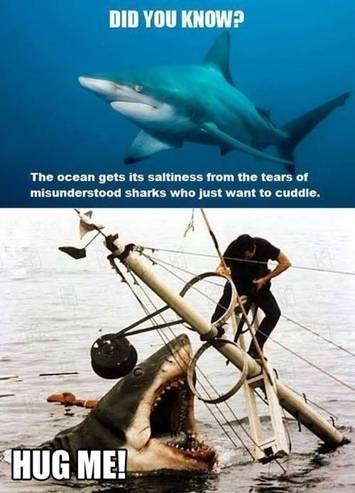 tears of misunderstood sharks, hug me, meme, lol, ocean saltiness