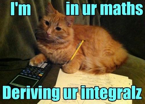cat, math, calculus, meme