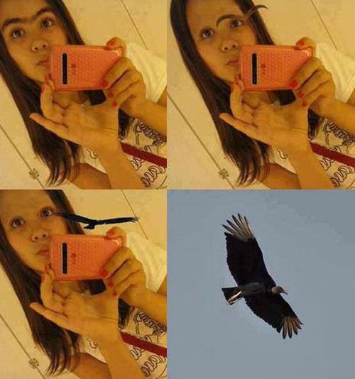 selfie, unibrow, bird, photoshop, lol