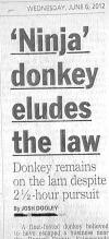 newspaper headline, ninja donkey on the lam