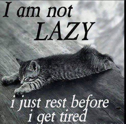 cat, lazy, rest before tired