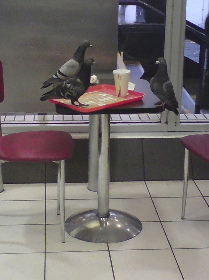 pigeons, fast food, meeting