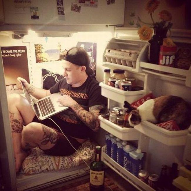 chilling inside the refrigerator, wtf, cat, lol
