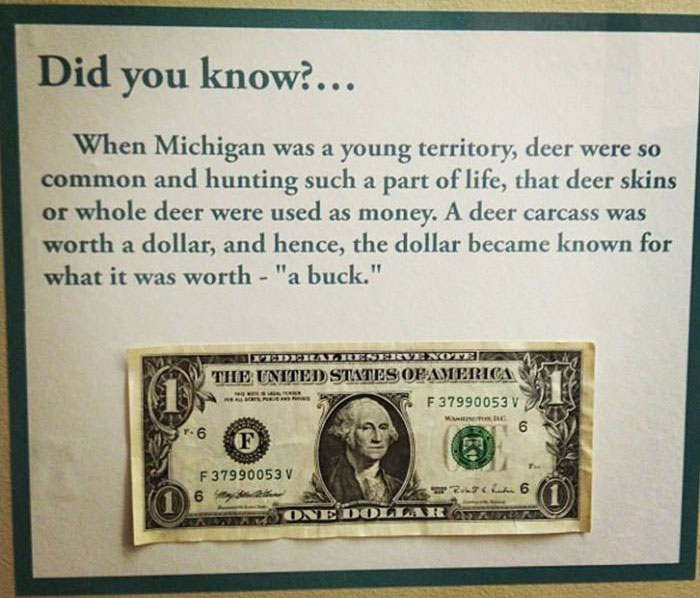 history, buck, dollar bill, michigan, deer skin