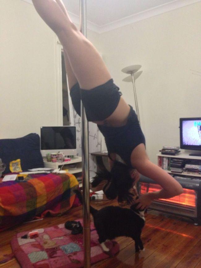 cat, striper pole, upside down girl