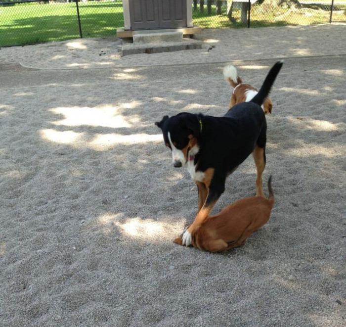 dog, troll, paw on head in sand, bully