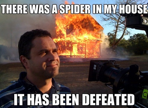 spider, fire, house, news, meme, defeated