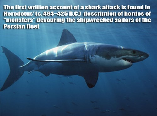 the first written account of a shark attack is found in herodotus' description of hordes of monsters devouring the shipwrecked sailors of persian fleet