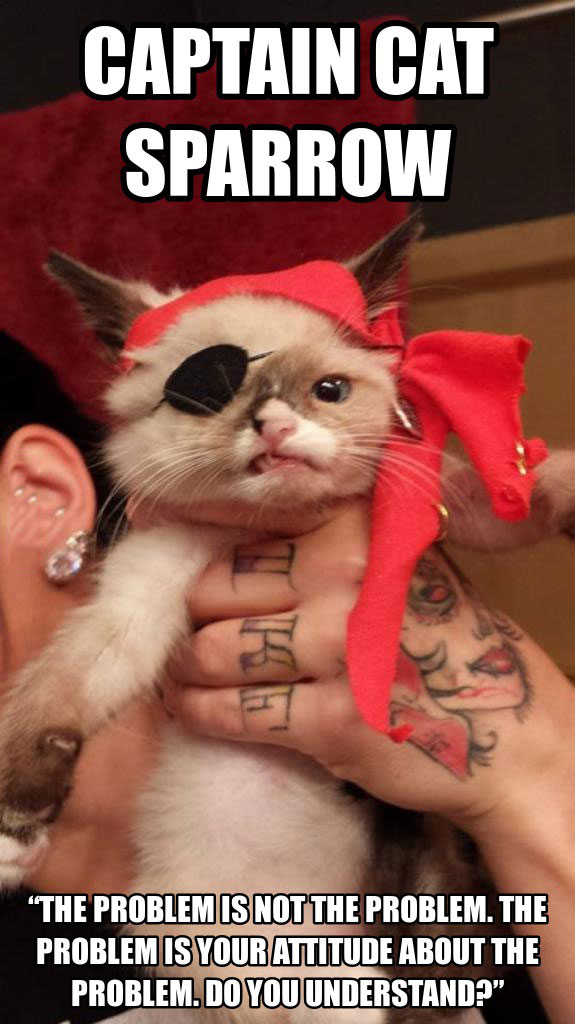 captain cat sparrow, cute, the problem is not the problem, the problem is your attitude about the problem, do you understand?, meme