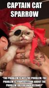 captain cat sparrow, cute, the problem is not the problem, the problem is your attitude about the problem, do you understand?, meme
