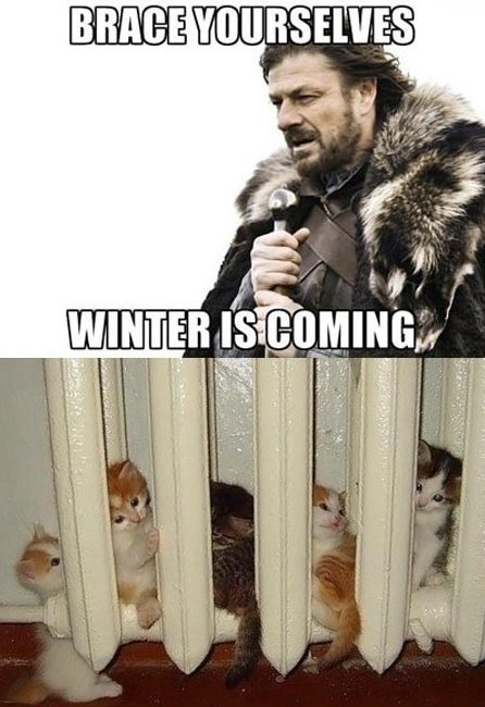game of thrones, brace yourselves, winter is coming, kittens, radiator