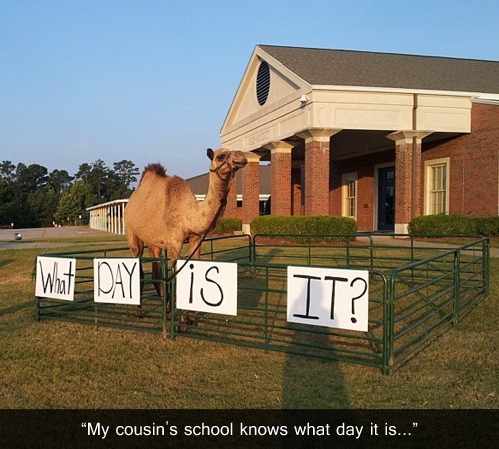 camel, what day is it, hump, school, story, wtf
