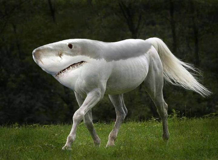 shark horse, photoshop, wtf, lol