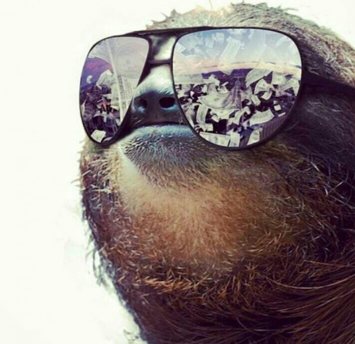 sloth, sun glasses, cash
