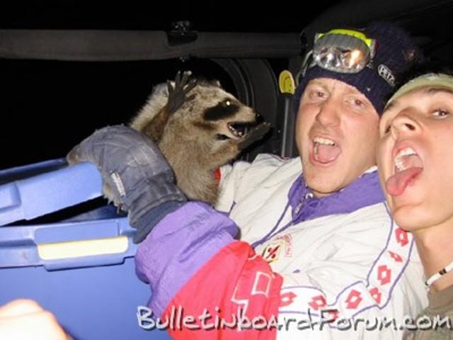 racoon photobomb, attack, wtf, lol
