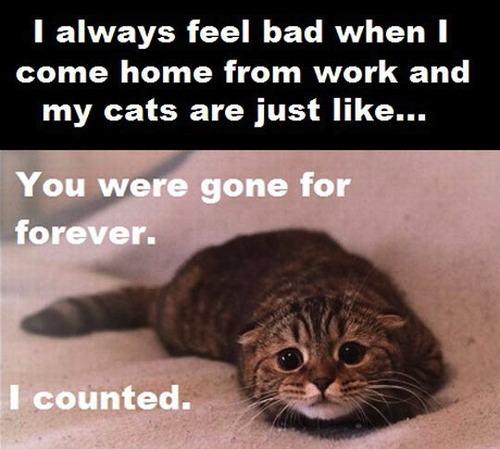 cat, gone for forever, counter, cute, sad, come home from work