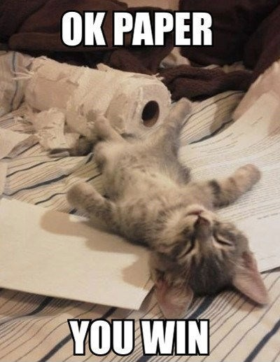 kitten, sleep on back, ok paper you win, meme, cute